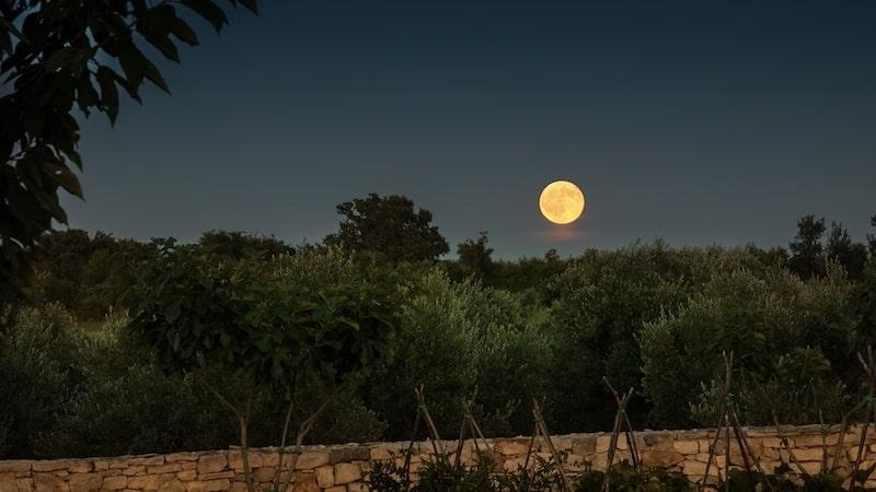 BRIST_OLIVE OIL_Moon Rise