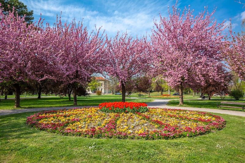 Beat The Crowds In Slavonia_Park in Osijek