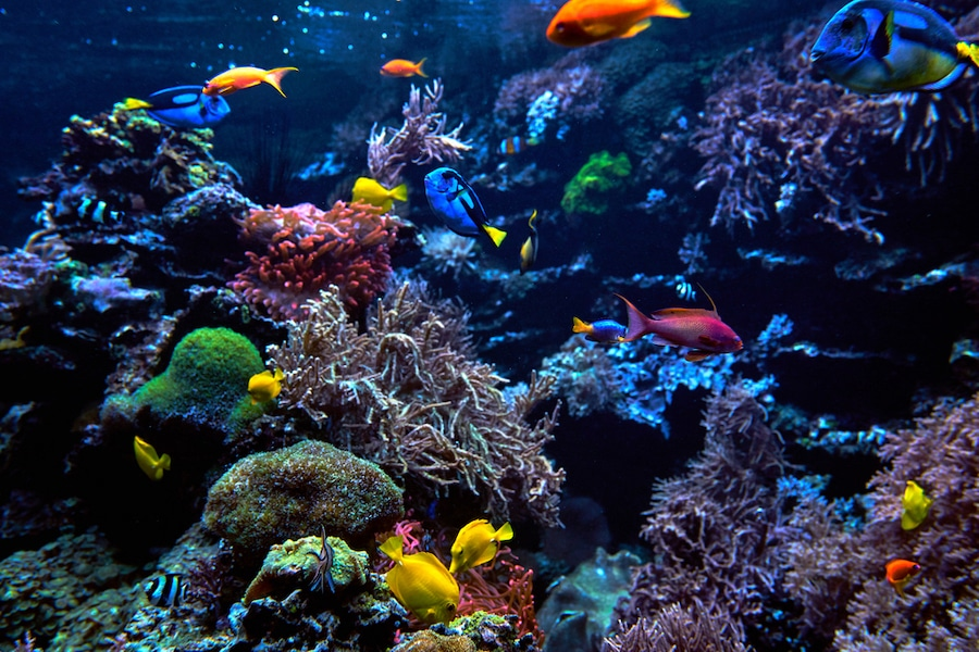Tropical fish at the Great Barrier Reef Australia