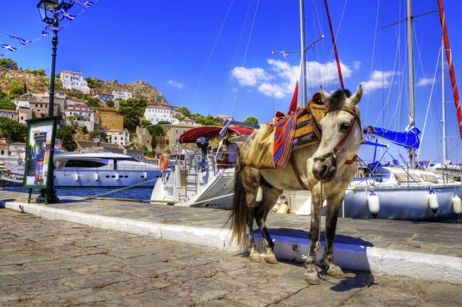 Hydra Island - Donkey on Greek island