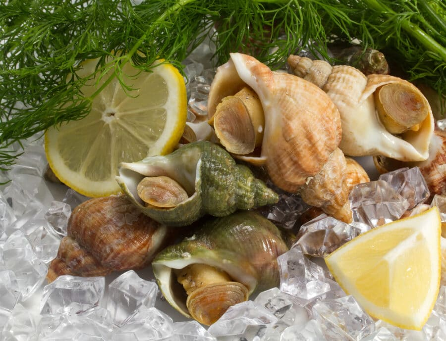 Bulgarian cuisine - Whelks