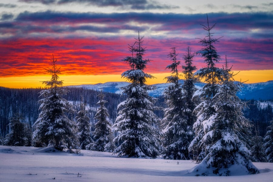 Romanian Winters - mountains with fir trees covered in snow near Marisel, Cluj County, Transylvania Region, Romania