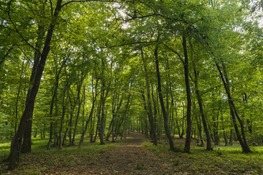 Things to do in Cluj_Mysterious forest, Hoia-Baciu, Romania Near Cluj