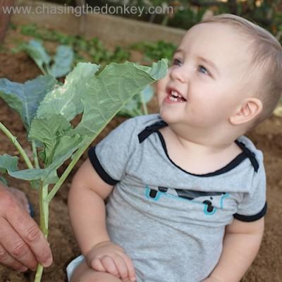 vladimir cabbage gardening summer autumn
